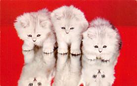 top007183 - Cat Post Card, Cats Postcards