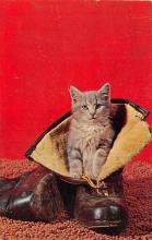 top007189 - Cat Post Card, Cats Postcards