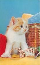top007197 - Cat Post Card, Cats Postcards