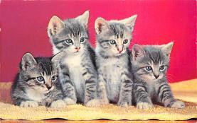 top007199 - Cat Post Card, Cats Postcards