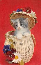 top007201 - Cat Post Card, Cats Postcards
