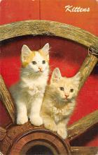 top007203 - Cat Post Card, Cats Postcards
