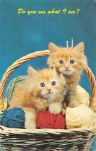 top007205 - Cat Post Card, Cats Postcards