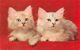 top007207 - Cat Post Card, Cats Postcards
