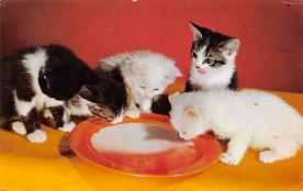 top007217 - Cat Post Card, Cats Postcards