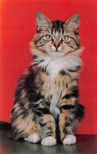 top007229 - Cat Post Card, Cats Postcards