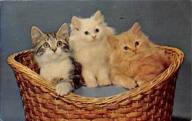 top007231 - Cat Post Card, Cats Postcards