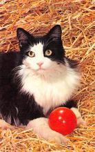 top007241 - Cat Post Card, Cats Postcards
