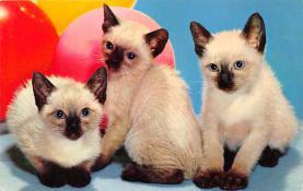 top007253 - Cat Post Card, Cats Postcards