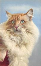 top007269 - Cat Post Card, Cats Postcards