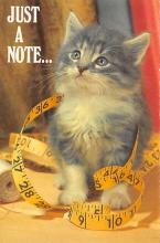 top007273 - Cat Post Card, Cats Postcards