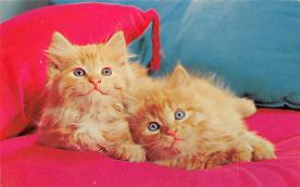top007289 - Cat Post Card, Cats Postcards