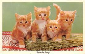 top007311 - Cat Post Card, Cats Postcards