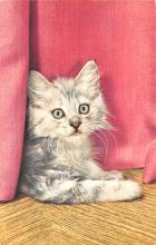 top007317 - Cat Post Card, Cats Postcards