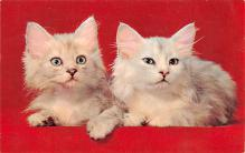 top007337 - Cat Post Card, Cats Postcards