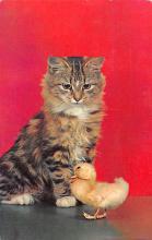 top007343 - Cat Post Card, Cats Postcards