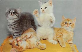 top007345 - Cat Post Card, Cats Postcards