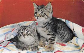 top007355 - Cat Post Card, Cats Postcards