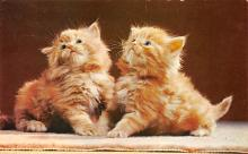 top007377 - Cat Post Card, Cats Postcards