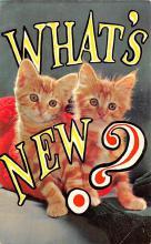 top007381 - Cat Post Card, Cats Postcards