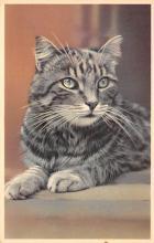 top007383 - Cat Post Card, Cats Postcards