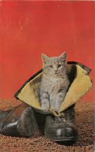 top007385 - Cat Post Card, Cats Postcards