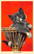 top007389 - Cat Post Card, Cats Postcards