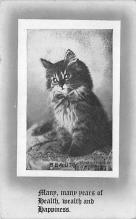 top007391 - Cat Post Card, Cats Postcards