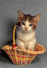 top007403 - Cat Post Card, Cats Postcards