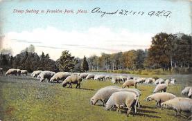 top007415 - Sheep Post Card