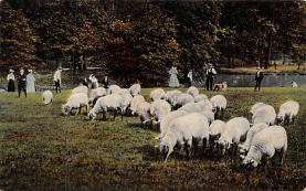 top007423 - Sheep Post Card