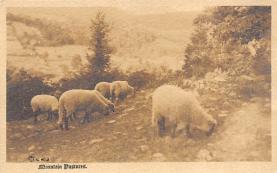 top007433 - Sheep Post Card