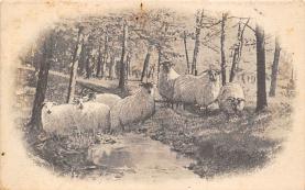top007437 - Sheep Post Card