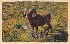 top007443 - Sheep Post Card
