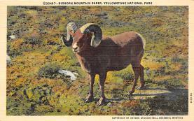 top007445 - Sheep Post Card