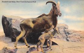 top007447 - Sheep Post Card