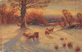 top007457 - Sheep Post Card