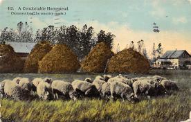top007465 - Sheep Post Card