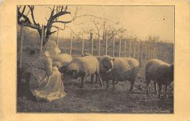 top007475 - Sheep Post Card
