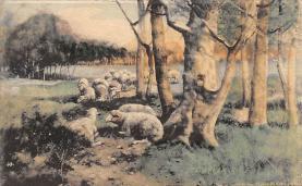 top007477 - Sheep Post Card