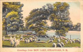 top007479 - Sheep Post Card