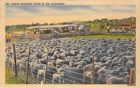 top007481 - Sheep Post Card