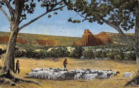 top007487 - Sheep Post Card