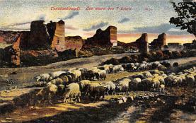 top007489 - Sheep Post Card