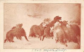 top007491 - Sheep Post Card