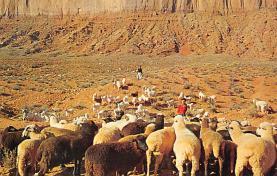 top007499 - Sheep Post Card