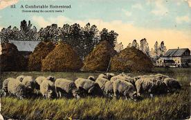 top007501 - Sheep Post Card