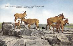 top007519 - Sheep Post Card