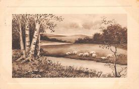 top007521 - Sheep Post Card