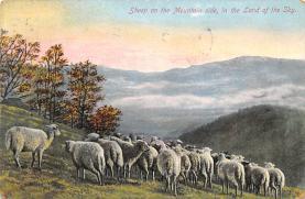 top007531 - Sheep Post Card